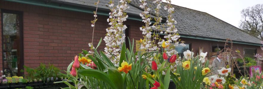 Visit Derwen College Garden Centre
