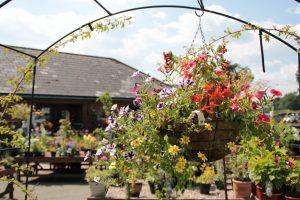 Derwen College Garden Centre