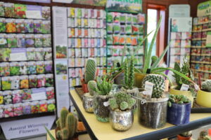 Cactus and seed at Garden Centre