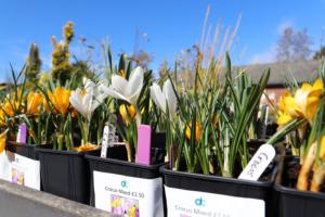 Plants for sale at Derwen College Garden Centre